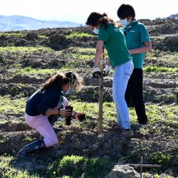 Terrenos municipais foram reconvertidos com a plantação de espécies autóctones
